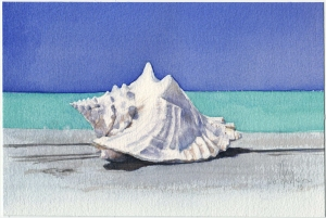 Bahamian Conch Shell